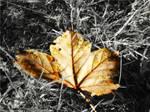 amber tears of autumn