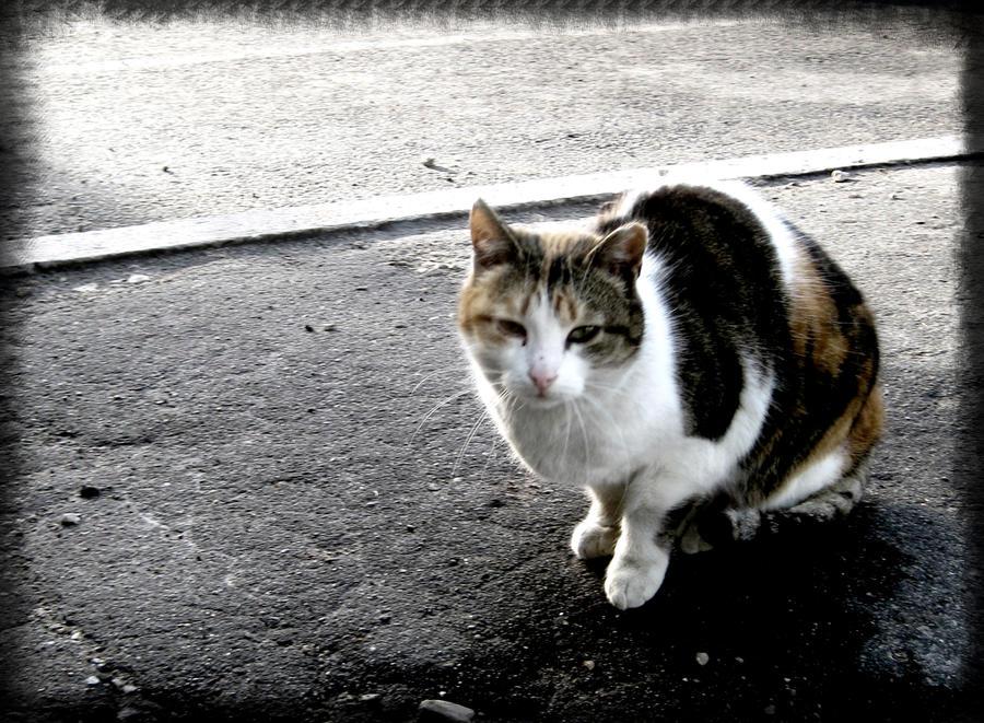 lonely sad cat - photo #1