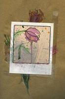 TulipCollage by Diamara