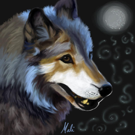 Blue Tinted Wolf by malika-mango