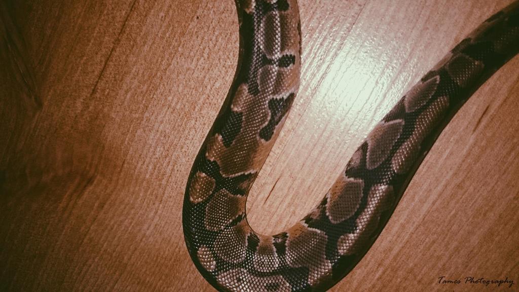 Snake bend by Hachidori25