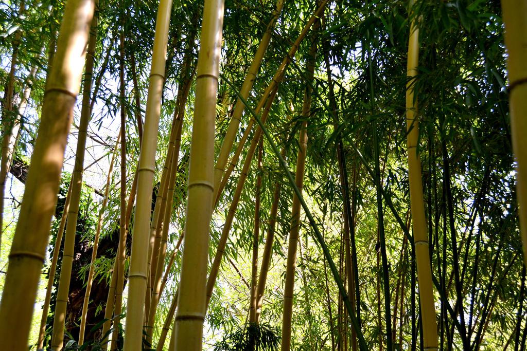 Bamboo by Hachidori25
