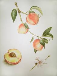 peaches by Torgii