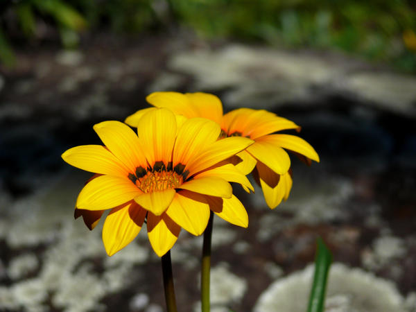 Reach for Sunshine by Meggsy