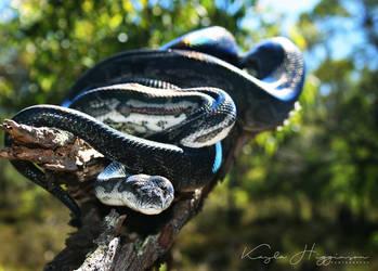 Rainbow Serpent by Nero-Egernia