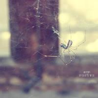 Spider's Web by irfansirin