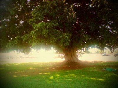 Tree of Life by XxXUmikoXxX
