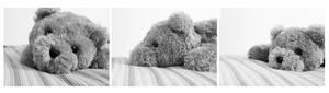 Confessions of a Teddy Bear I
