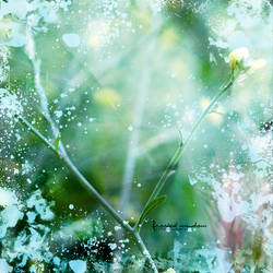 frosted window by rinnalynette