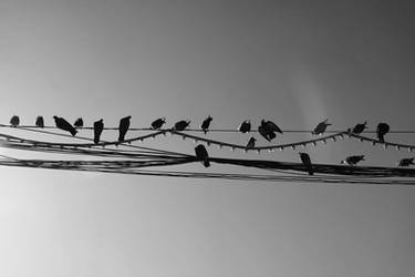 .The Birds. by seorangprempuan