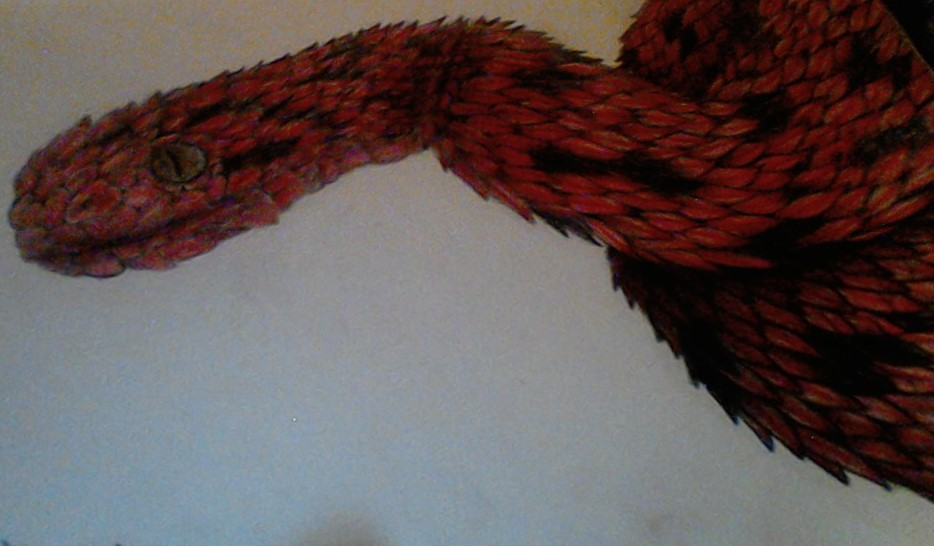 Red and Black Bush Viper by InternalFlame21 on DeviantArt