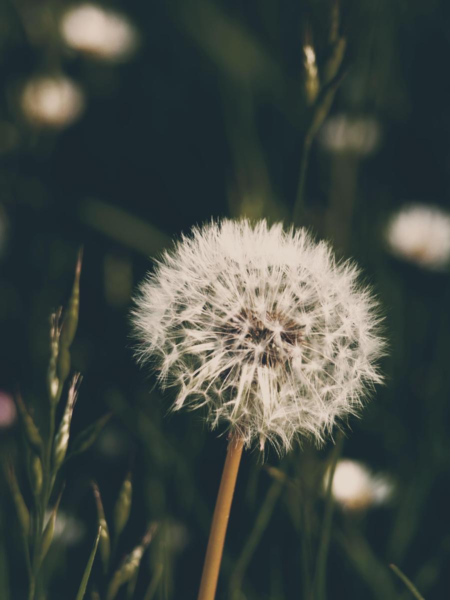 Hipster Flower by SlowingDown on deviantART