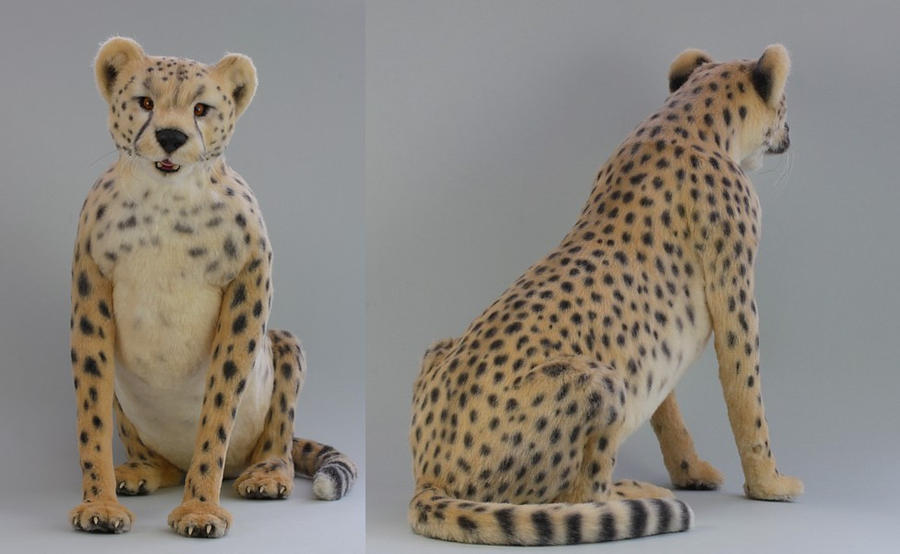 Masozi the Cheetah by LisaAP