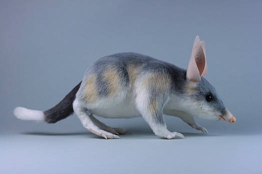 Ninu the Bilby