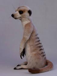 Dickens the meerkat