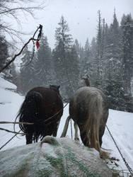 Carpathians express by kristina1lyba