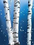 White Birch Trees by SerafinaMoon