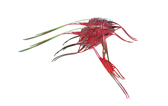 Apophysis-100927-155
