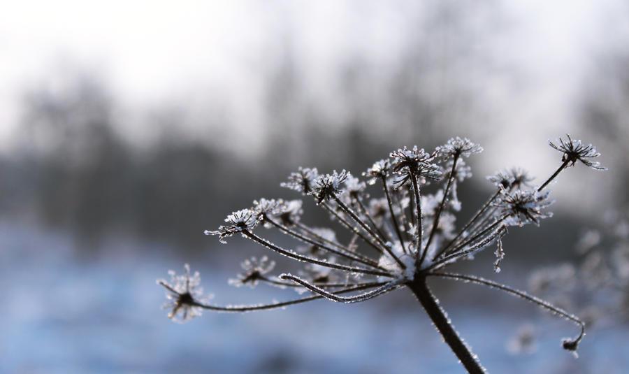 Frozen by Dankan