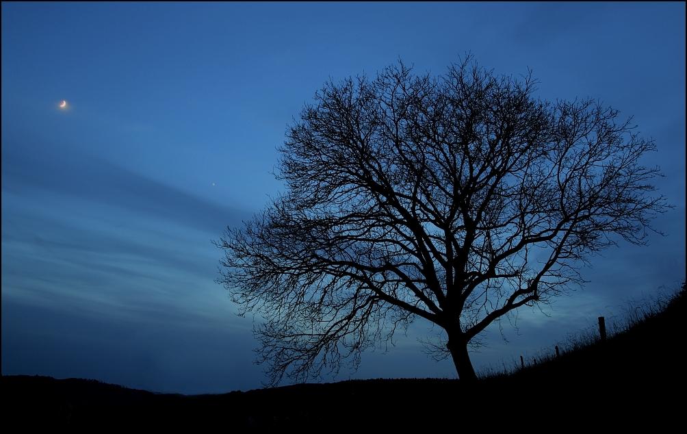 Moonlight by Osiris81