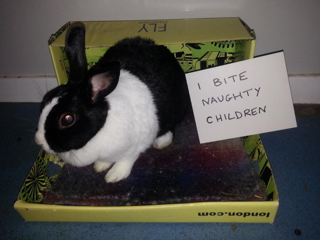 Rabbit Shaming by Wabbit-t3h