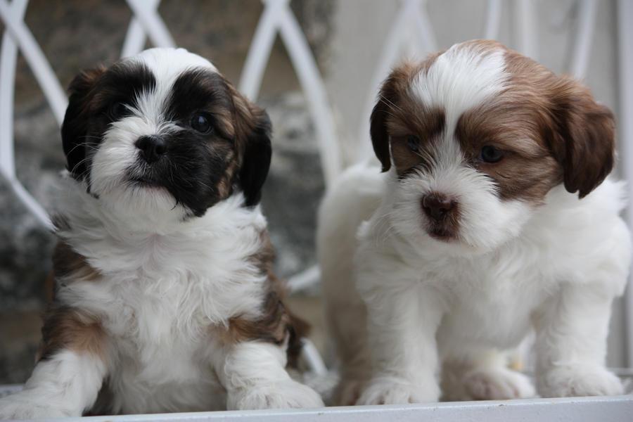Puppies 5 by notKamalayx