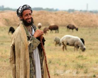 Afghan Shepherd by Ironpaw