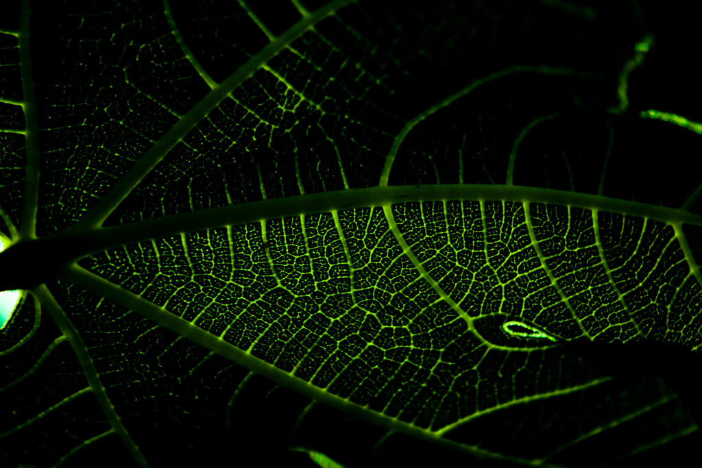 Underside Of A Huge Leaf by designerfied
