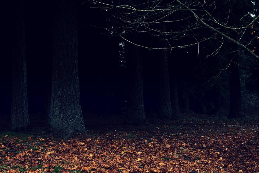 Dark Woods Wallpaper By Designerfied