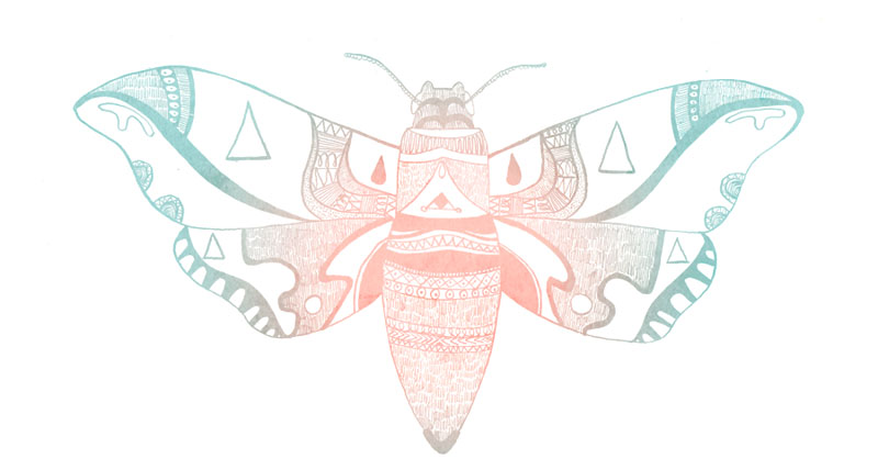 Moth by NicolaWallace