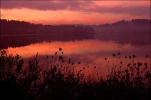 Mill Pond, Dawn