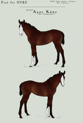 OVEC Aear Kano - Foal by SageSinRiddle