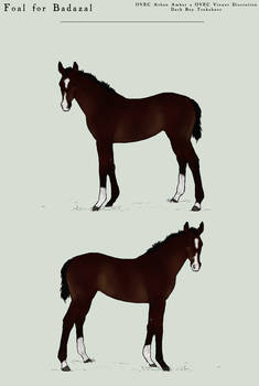 Foal for Badazal