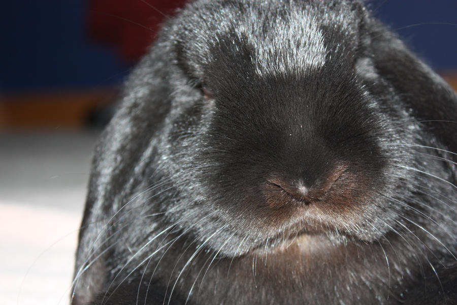 Angry bunny is angry by L91 on DeviantArt