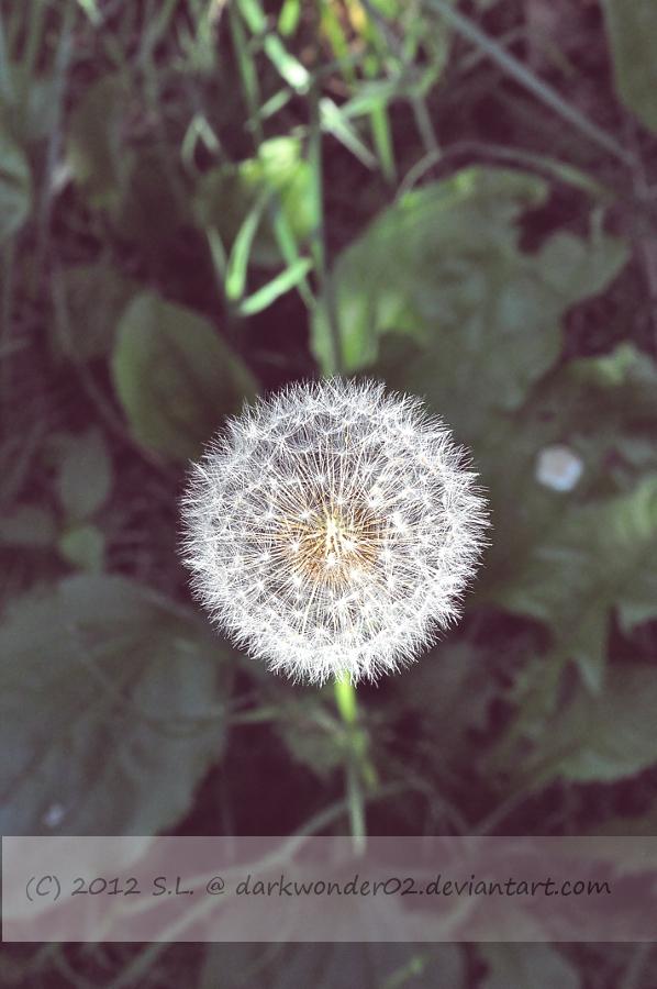 Summer Wishes by darkwonder02