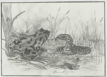 Frog and snake by Ke-Ke-Ke-Ke