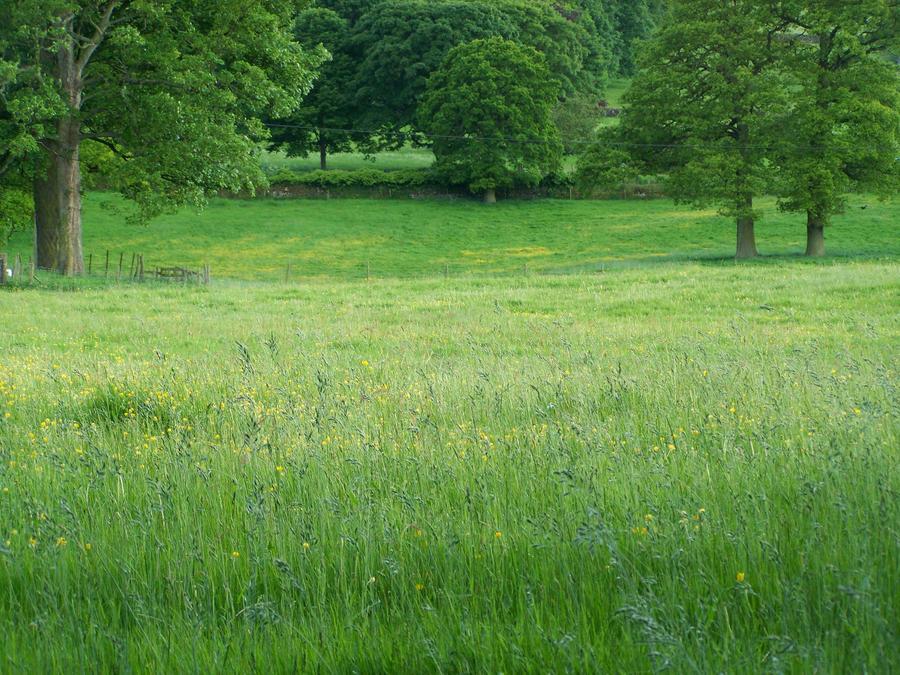 Meadow Stock 1