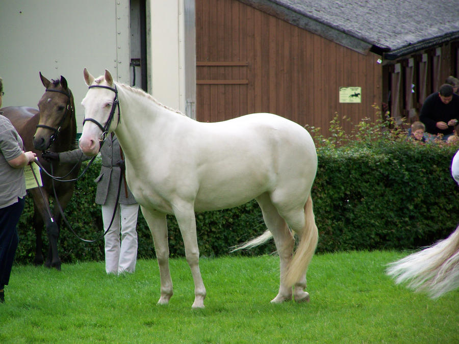 Cremello Horse Stock 1 by FiagaiStock