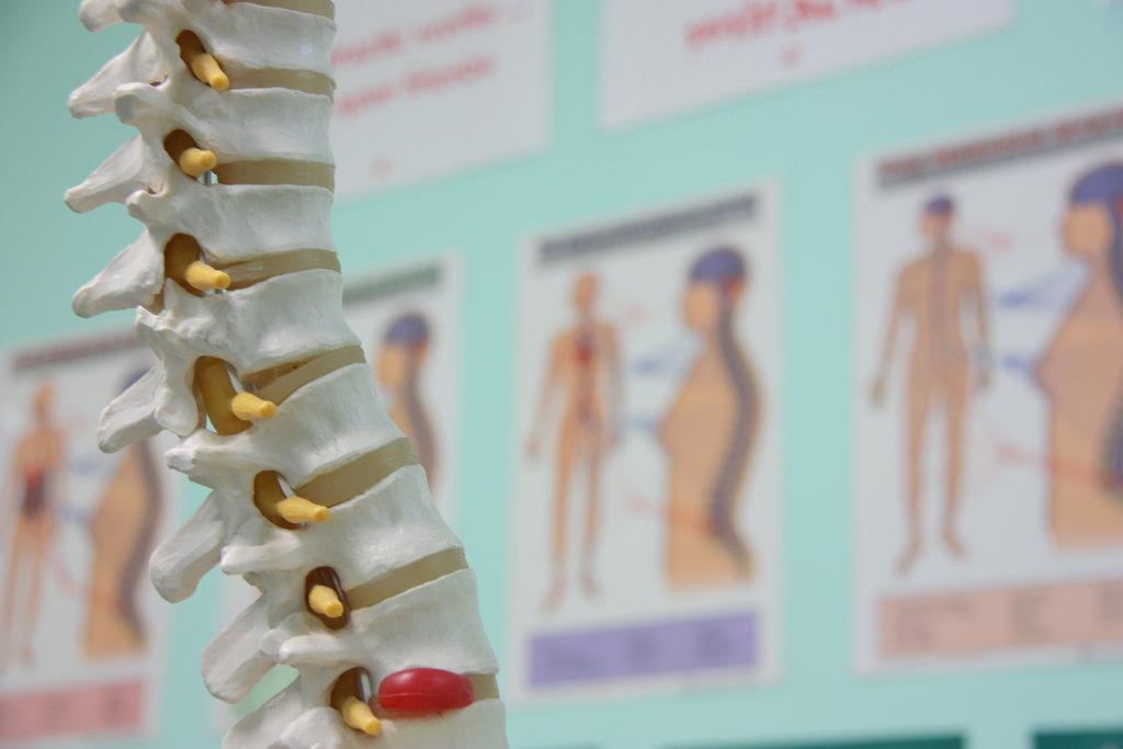 Spine by chiropractoradelaide