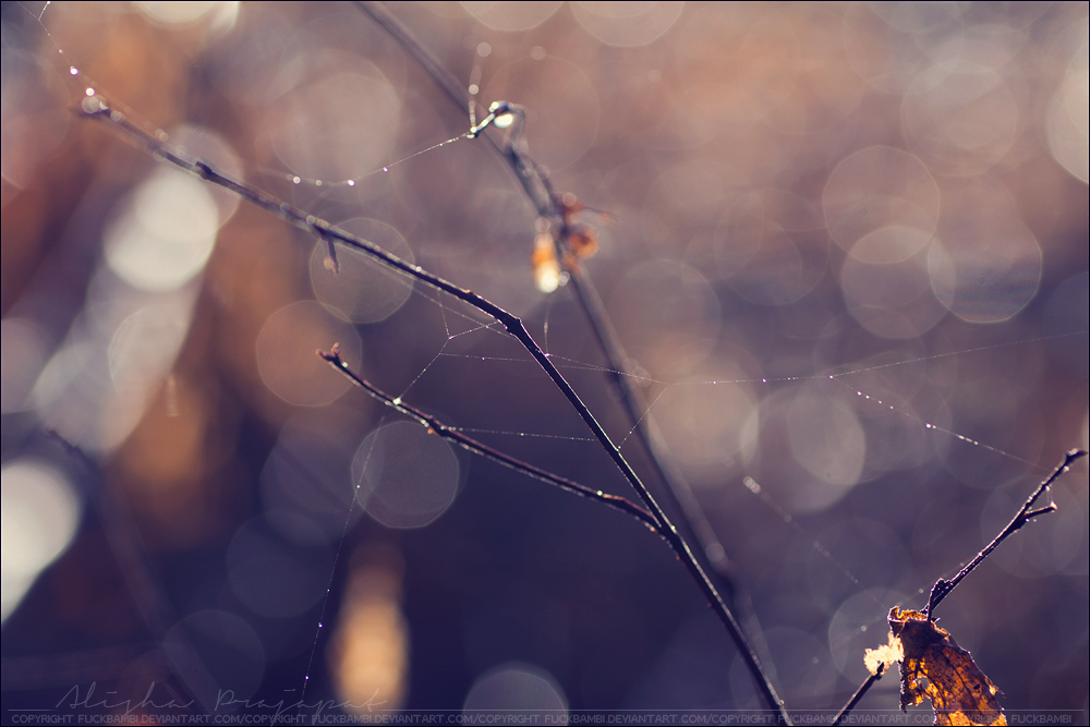 Spiderweb, pt IV. by Ravenith