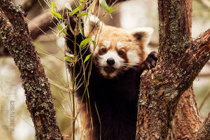 Oh, bamboo! by Ravenith