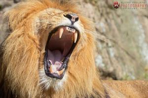 A big yawn. by Ravenith