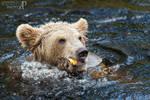 Hungry bear II.