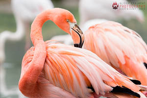Tired flamingo. by Ravenith