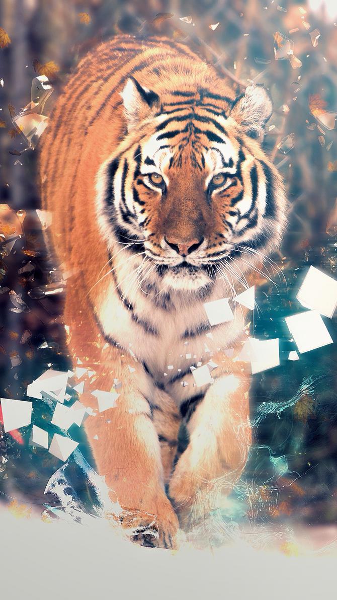 Tiger by Engelthal-B