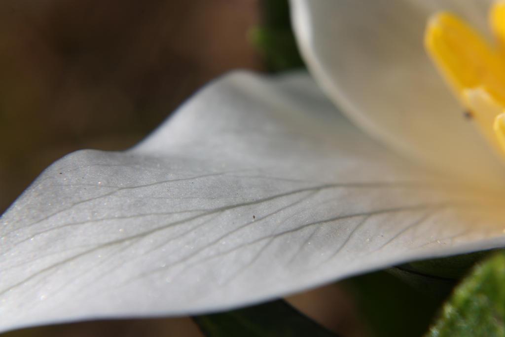 Nature Veins by dumbplum66