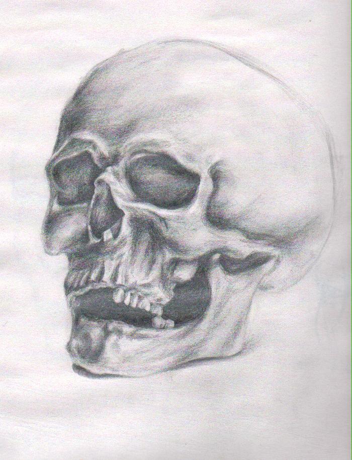 Random Still Life Skull Study - 20 minutes by IVRisk
