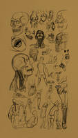 Anatomy Study - 01