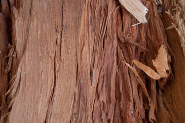 Wood 2 by photoshop-stock