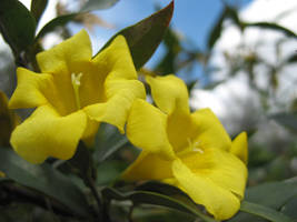 Yellow Flowers by Larah88